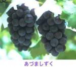adumashizuku