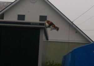 ネコ飛び乗る